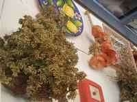 la casa del cous cous sanvitese cipolle, origano, e piatti in ceramica - 18 agosto 2012  - San vito lo capo (470 clic)