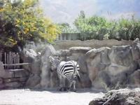 BIOPARCO di Sicilia - zoo - 17 luglio 2012 - Foto di Nicolò Pecoraro  - Villagrazia di carini (362 clic)