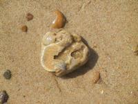 conchiglia fossile  - 10 settembre 2012  - Alcamo marina (327 clic)