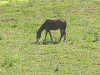 cavallo in libertà - Baglio Arcudaci - 1 aprile 2012  - Bruca (2128 clic)