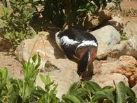 BIOPARCO di Sicilia - fattoria - 17 luglio 2012  - Villagrazia di carini (346 clic)