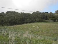 Bosco di Scorace - 4 marzo 2012  - Buseto palizzolo (724 clic)