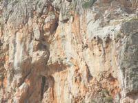 falesia e gabbiano in volo - 8 aprile 2012  - Macari (788 clic)