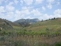 panorama agreste e Monte Bonifato - 1 maggio 2012  - Alcamo (389 clic)