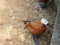 BIOPARCO di Sicilia - fattoria - 17 luglio 2012  - Villagrazia di carini (403 clic)