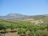 panorama agreste - Baglio Arcudaci - 27 maggio 2012  - Bruca (307 clic)
