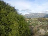 Riserva Naturale Orientata Capo Rama - 15 aprile 2012  - Terrasini (1241 clic)
