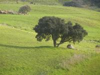 panorama agreste - 4 marzo 2012  - Buseto palizzolo (997 clic)