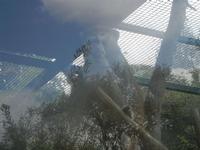 BIOPARCO di Sicilia - primati - 17 luglio 2012  - Villagrazia di carini (334 clic)