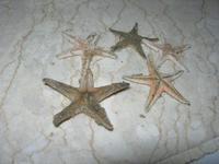 stelle marine - 16 settembre 2012  - Alcamo marina (362 clic)