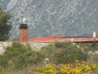 gabbiani su comignolo e tetto - 15 aprile 2012  - Terrasini (1172 clic)