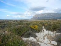 Riserva Naturale Orientata Capo Rama - 15 aprile 2012  - Terrasini (577 clic)