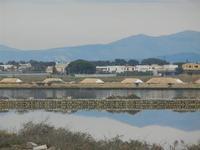 Saline - 29 gennaio 2012  - Marsala (481 clic)