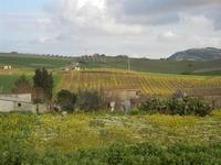 panorama agreste - 4 marzo 2012  - Bruca (675 clic)
