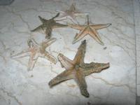 stelle marine - 16 settembre 2012  - Alcamo marina (413 clic)