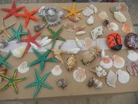 stelle marine, conchiglie e sassi colorati - 29 aprile 2012  - San vito lo capo (629 clic)