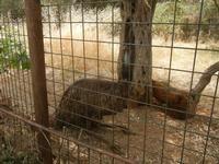 BIOPARCO di Sicilia - Zoo - 17 luglio 2012  - Villagrazia di carini (398 clic)