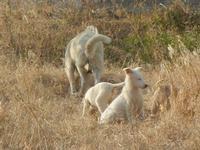 cagna e cagnolini - 4 marzo 2012  - Bruca (840 clic)