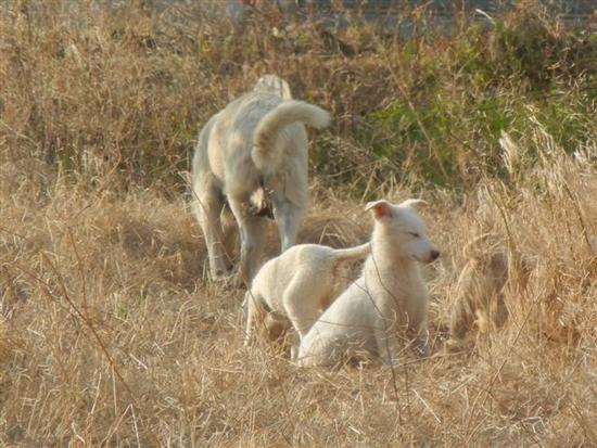cagna e cagnolini - BRUCA - inserita il 18-Apr-14
