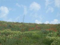 SIRIGNANO - collina fiorita - 1 maggio 2012  - Monreale (537 clic)