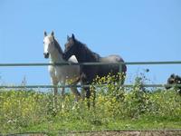 cavalli e puledro - Baglio Arcudaci - 1 aprile 2012  - Bruca (2265 clic)
