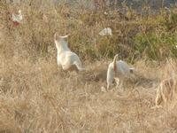 cagnolini - 4 marzo 2012  - Bruca (699 clic)