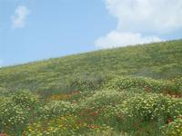 SIRIGNANO - collina fiorita - 1 maggio 2012  - Monreale (698 clic)