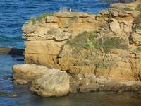 Cala Petrolo - 18 gennaio 2012   - Castellammare del golfo (355 clic)