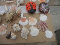 conchiglie e sassi colorati - 29 aprile 2012  - San vito lo capo (394 clic)