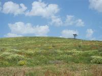 SIRIGNANO - collina fiorita - 1 maggio 2012  - Monreale (554 clic)