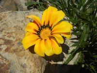 fiore - Baglio Arcudaci - 1 aprile 2012  - Bruca (578 clic)
