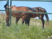 cavalli - Baglio Arcudaci - 27 maggio 2012  - Bruca (370 clic)