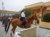 SPERONE - sfilata di cavalli - festa San Giuseppe Lavoratore - 29 aprile 2012  - Custonaci (653 clic)
