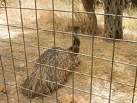 BIOPARCO di Sicilia - Zoo - 17 luglio 2012  - Villagrazia di carini (362 clic)