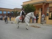 SPERONE - sfilata di cavalli - festa San Giuseppe Lavoratore - 29 aprile 2012  - Custonaci (643 clic)