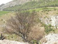 panorama area archeologica - 5 agosto 2012  - Segesta (782 clic)