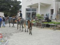 cavalli e puledri - PURGATORIO - preparativi della sfilata di cavalli - festa San Giuseppe Lavoratore a SPERONE - 29 aprile 2012  - Custonaci (455 clic)