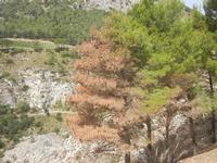 panorama area archeologica - 5 agosto 2012  - Segesta (830 clic)