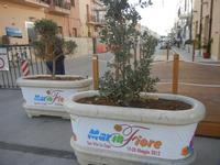 Via Savoia - 9 maggio 2012  - San vito lo capo (333 clic)