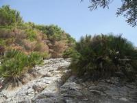 panorama area archeologica - 5 agosto 2012  - Segesta (1103 clic)