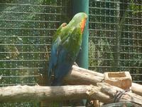 BIOPARCO di Sicilia - Zoo - 17 luglio 2012  - Villagrazia di carini (356 clic)