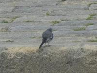 uccello - all'Imbarcadero Storico per l'Isola di Mozia - 29 gennaio 2012  - Marsala (472 clic)