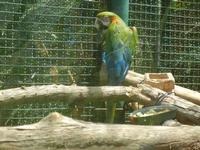 BIOPARCO di Sicilia - Zoo - 17 luglio 2012  - Villagrazia di carini (336 clic)