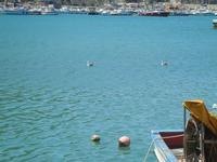 gabbiani in mare - al porto - 6 maggio 2012  - Castellammare del golfo (407 clic)