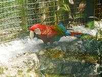 BIOPARCO di Sicilia - Zoo - 17 luglio 2012  - Villagrazia di carini (330 clic)