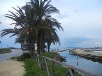 palme all'Imbarcadero Storico per l'Isola di Mozia - 29 gennaio 2012  - Marsala (825 clic)