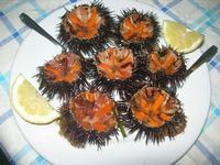 ricci di mare - Frutti di Mare da Giovanni - 3 luglio 2012  - Balestrate (838 clic)
