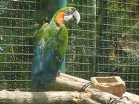 BIOPARCO di Sicilia - Zoo - 17 luglio 2012  - Villagrazia di carini (393 clic)
