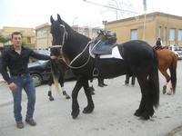 SPERONE - sfilata di cavalli - festa San Giuseppe Lavoratore - 29 aprile 2012  - Custonaci (509 clic)