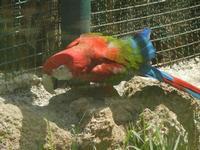 BIOPARCO di Sicilia - Zoo - 17 luglio 2012  - Villagrazia di carini (352 clic)